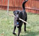 dog-fetches-stick.jpg