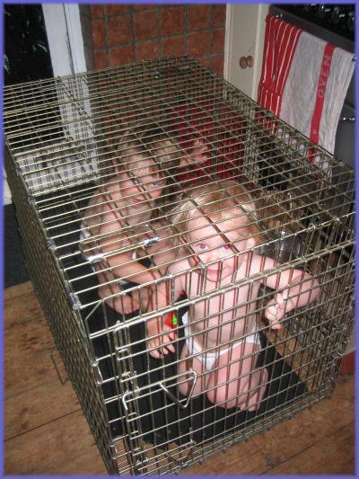cagesubmit-756383.jpg